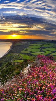 flowers, grass, sea, sunset, light