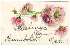 Vintage Humboldt Nebraska 1910s Pink Floral Greetings Postcard