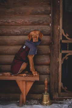 15 Things Only Vizsla Owners Would Understand Beagle, Vizsla Puppies, Dogs And Puppies, Vizsla Dog, Doggies, Shiba Inu, Wirehaired Vizsla, Dog Booties, Hungarian Vizsla