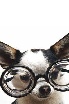 [#Animals wearing glasses, #Dog] Dog in Glasses