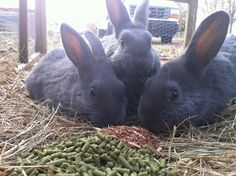Haven Homestead: Feeding Rabbits Organically on a Pasture-based System