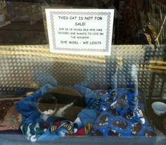 cat not for sale