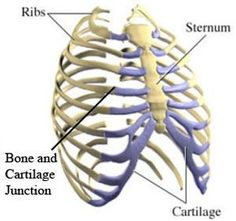 I get this all the time... There is a symptom of Fibromyalgia (FM) that is rarely talked about -- costochondritis-syndroom-tietze...It is a chest pain that can be sharp and jabbing.  It can easily be mistaken for heart problems including heart attack and stroke.  Actually it is the cartilage between the ribs and the chest bone becoming inflamed and sore.