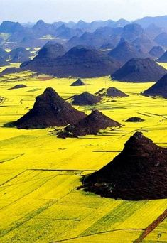Canola Flower Fields, China  - 15 Unbelievable Places we resist really exist   Incredible Pictures