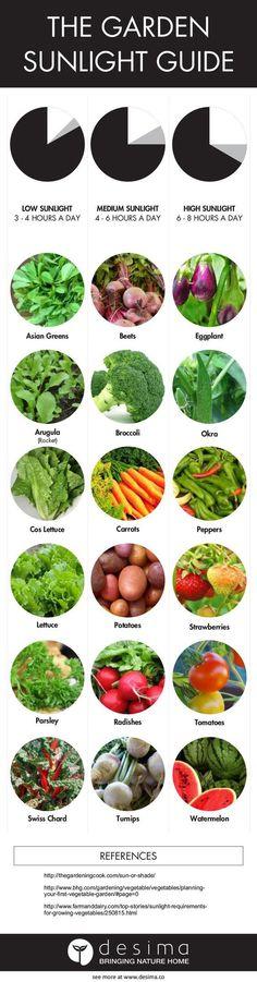 Garden sunlight guide #gardenbeds