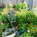 Macronutrientes, micronutrientes y fertilizantes caseros