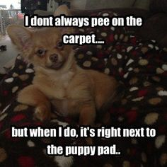 Animals are the best entertainment in the World, which make us laugh anytime, anywhere! Just look ridiculous animal picdump of the day 50 if you love funny animals. So ridiculous, funny and cute 26 funny animal pics! Funny Animal Memes, Funny Animal Videos, Dog Memes, Cute Funny Animals, Funny Animal Pictures, Funny Cute, The Funny, Funny Dogs, Animal Humor
