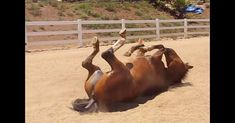 It's Gotta Come Out At Some Point! LOL! Farting Horse Is So Darn Happy!   The Animal Rescue Site Blog
