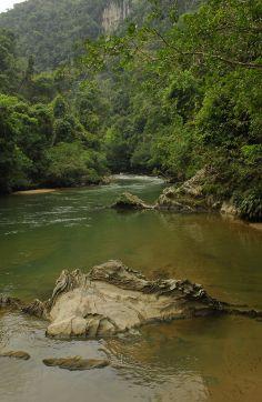Refugio de vegetación tropical caracterizado por bosques Húmedos que crecen sobre rocas calizas en los yacimientos de mármol de la región de río claro.