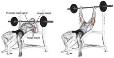 The incline barbell bench press targets your clavicular (upper) pectoralis major, while your anterior deltoid and triceps brachii act as synergists. Weight Training Programs, Weight Training Workouts, Gym Workout Tips, Workout Routines, Bench Press Workout, Chest Day Workout, Chest Workouts, Chest Exercises, Body Workouts