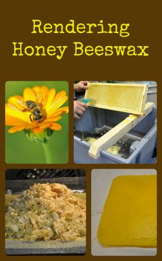 Rendering Honey Beeswax This is an easy way to get those beeswax cappings rendered and ready for making awesome beeswax products!This is an easy way to get those beeswax cappings rendered and ready for making awesome beeswax products! Beekeeping For Beginners, Buzz Bee, Raising Bees, Backyard Beekeeping, Growing Mushrooms, Bee Friendly, Honey Recipes, Bee Happy, Save The Bees