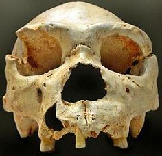 Heidelberg Man thought to be the progenitor of Neanderthals.  Primative language, use of red paint and buried their dead.  First sign of spirituality.  In the scheme of our other lesser developed hominids it did not last very long. Lived between600,000 and 400,000 years ago