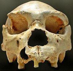HOMO HEIDELBERGENSIS  es una especie extinta del género Homo, que surgió hace más de 600 000 años y perduró al menos hasta hace 200 000 años.