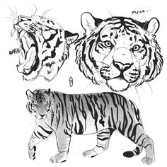 Drawing Animals in the Zoo - Drawing On Demand Big Cats Art, Cat Art, Furry Art, Tiger Sketch, Tiger Drawing, Animal Sketches, Animal Drawings, Art Sketches, Cat Reference
