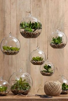 Phenomenal Indoor Herb Gardens Terrarium are a simple and cost effective way to breathe new life into a room and add greenery.Terrarium are a simple and cost effective way to breathe new life into a room and add greenery. Hanging Air Plants, Indoor Plants, Hanging Gardens, Diy Hanging, Potted Plants, Succulents Garden, Planting Flowers, Hanging Succulents, Succulent Plants