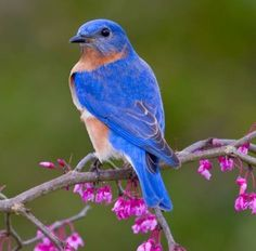 It's Time to Hit the Trail . . . the Bluebird Trail, that is. | T ...