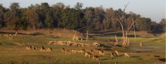 Indian Safari
