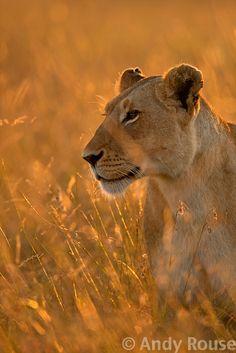 Andy Rouse - Wildlife Photographer|