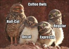 Coffee Owls. (Cute, but they mispelled espresso, no x.)