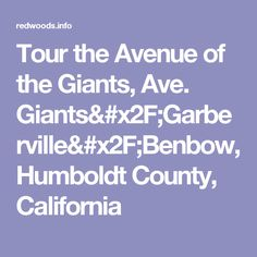Tour the Avenue of the Giants, Ave. Giants/Garberville/Benbow, Humboldt County, California