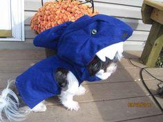 This left-shark Halloween costume.