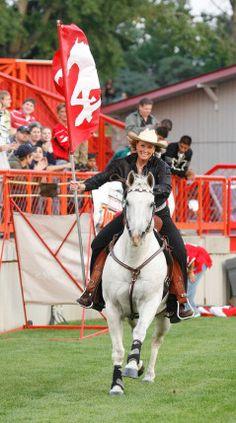 Calgary Stampeder's Horse