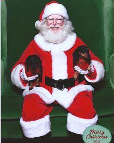 Christmas Dachshund, Beautiful Christmas, Ronald Mcdonald, Fictional Characters, Fantasy Characters