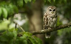 15 Wild Animals And Wildlife Photos   MostBeautifulThings