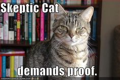 Skeptic cat demands proof  saving for forums personalitycafe
