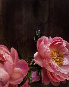 botanical no. 5649. $30.00, via Etsy - so pretty