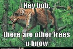 Funny pictures about Just a couple lynx spooning in a tree. Oh, and cool pics about Just a couple lynx spooning in a tree. Also, Just a couple lynx spooning in a tree photos. Amor Animal, Mundo Animal, Crazy Cat Lady, Crazy Cats, I Love Cats, Big Cats, Funny Animal Pictures, Funny Animals, Funny Photos