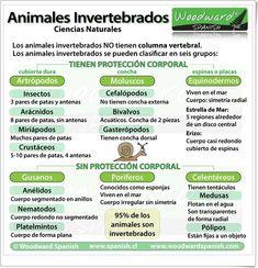 Características de los animales invertebrados.