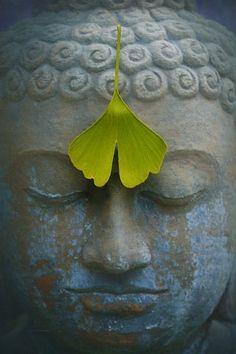 Zen Meditation, Root Chakra Meditation, Meditation Images, Meditation Benefits, Buddha Life, Buddha Zen, Gautama Buddha, Sanskrit, Wedding Destination