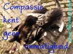compassie onmatigheid enneagramtype 7