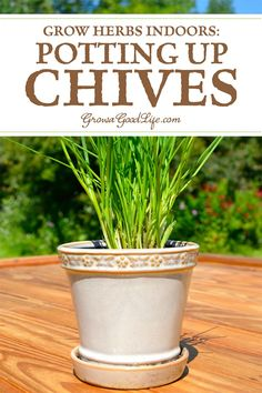 Indoor Vegetable Gardening Tips for Growing Chives Indoors: See how to divide and pot up chives to grow on a sunny windowsill indoors for fresh harvests all winter. Easy Plants To Grow, Growing Plants Indoors, Herbs Indoors, Growing Herbs, Indoor Vegetable Gardening, Organic Gardening, Gardening Tips, Container Gardening, Pallet Gardening
