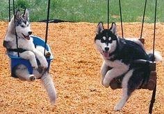 DOG SWING!