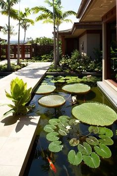 Still water feature stocked full with aquatic plants and lily pads.