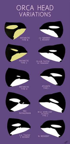 www.pegasebuzz.com | Orca, orque, killer whale, black fish. Orca Head Variations by LlamaTHEDragon.