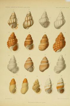 Mollusques Marins des Acores.  Revision des mollusques marins des Açores  [Monaco] :Imprimerie de Monaco,1889.  Biodiversitylibrary. Biodivlibrary. BHL. Biodiversity Heritage Library