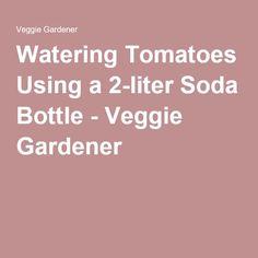 Watering Tomatoes Using a 2-liter Soda Bottle - Veggie Gardener