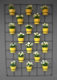 BeeBee.Grace: Wall/Hanging Plants