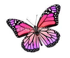 mariposa violeta rosa, aislado en blanco — Imagen de stock #18905917