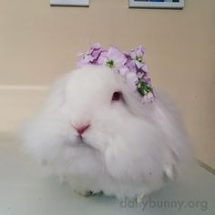 Bunny has a very nice flower crown - April 2, 2016