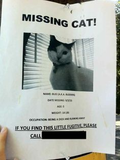 Missing Cat Poster Cute Pinterest Missing Cat Poster Cat - Missing cat gets found next to his own missing cat poster