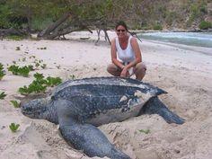 Wonders of the ocean inspired this marine biologist!