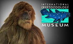 "Portland, ME - International Cryptozoology Museum.  The museum is curated by Portland cryptozoologist and author Loren Coleman, whose collection of more than 250 artifacts includes an 8-foot-tall, 400-pound replica of Wisconsin's ""Crookston Bigfoot"". Bigfoot and Yeti footcasts and sculptures of the Feejee Mermaid, Coelacanth fish and Jackalope are also on exhibit."