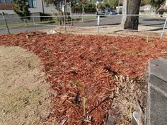 Marrickville Council National Tree Planting photo: Saving Our Trees - extensive use of mulching Modern Landscape Design, Modern Landscaping, Tree Planting, Trees To Plant, Chips, Layout, Wood, Garden, Nature
