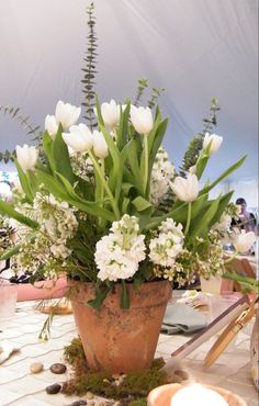 white tulips and stock in aged clay pot