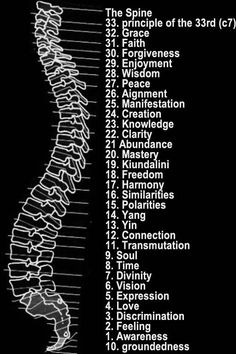 Spinal Chakra Points - Each Vertebrae relates to Lesson as well as Chakra and Organs in the Body.