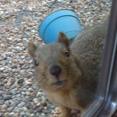 We have two like him that will eat off the window sill. We call them the twins. Hello!